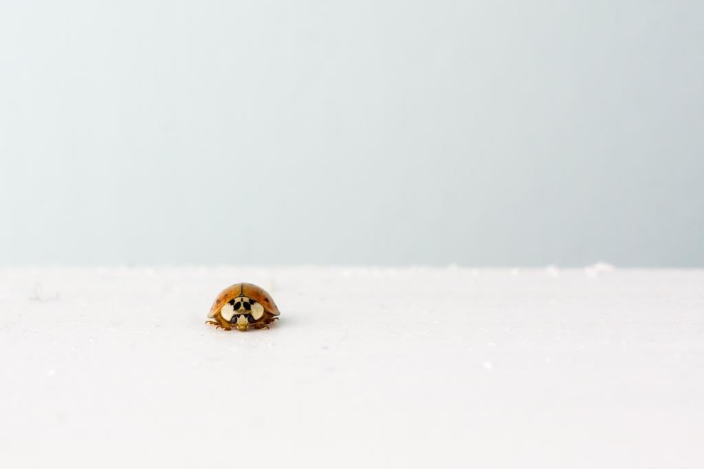 Ladybug-Ryan-McGuire